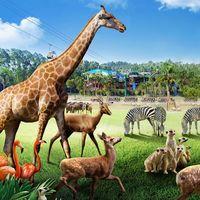长隆野生动物园及珠海长隆海洋王国动物推介