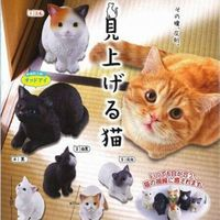 EPOCH「往上瞧的猫咪」疗愈扭蛋之作!