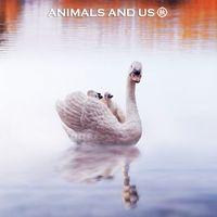 【阿秋玩具分享】动物模型摄影分享第二弹