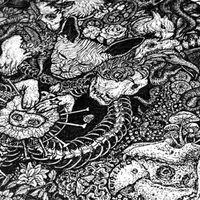 LY《万物系列》-原创艺术插画